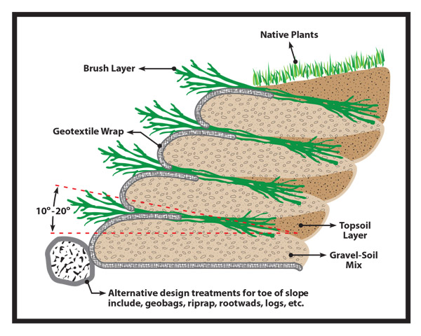 Brush or branch layers used in a bioengineering project.