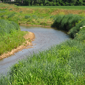 Riparian Area Planting Guide