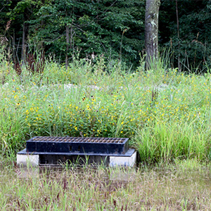 Stormwater Management Planting Guide