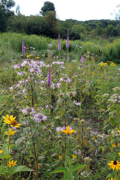 Color, texture and diversity evident in a native meadow