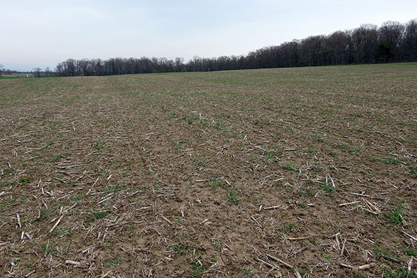A fall-seeded meadow shown in April of its first growing season. Note the winter weeds that established ahead of the desired seedlings.