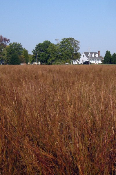 A little bluestem meadow in North Carolina