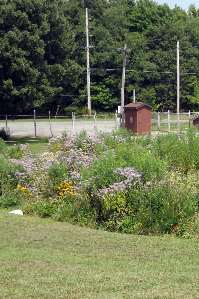 A flourishing rain garden on the Crawford County Fairgrounds in Meadville Pennsylvania
