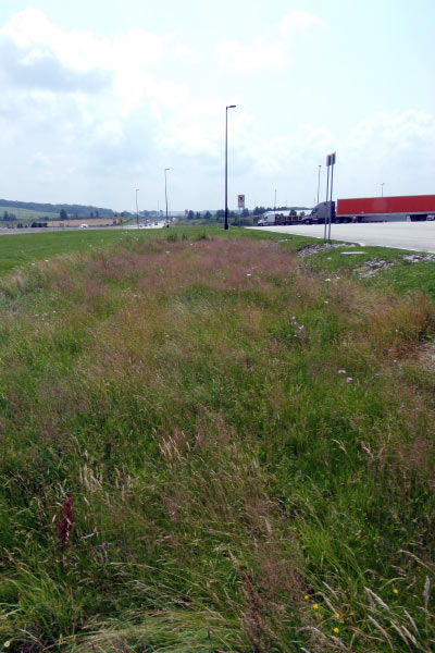 Native grasses and herbaceous species managing stormwater runoff from a large parking lot