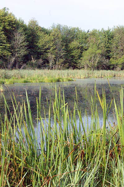 Native wetland plants make this western Pennsylvania pond a diverse wildlife habitat.