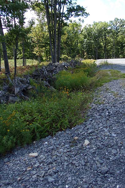 The perimeter of a well pad now serves as habitat for pollinators, song birds and other wildlife.