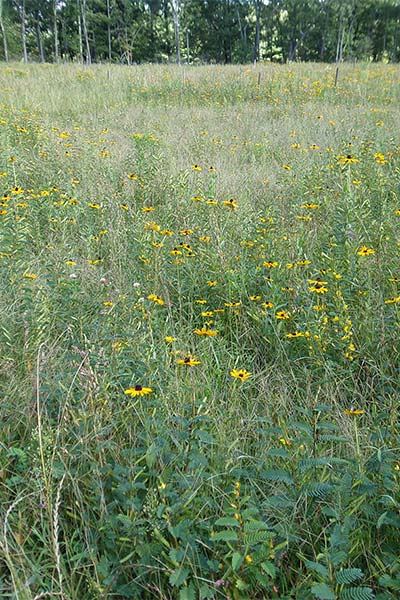 Reclaimed sites utilizing diverse native mixes better replicate the meadows historically found in their area.