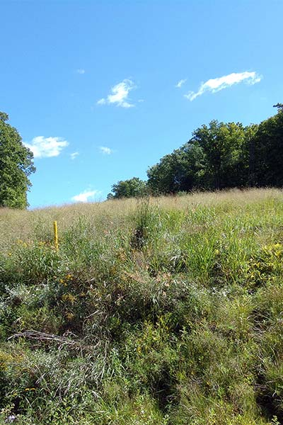 A utility right-of-way exhibits characteristics of a diverse early successional habitat.