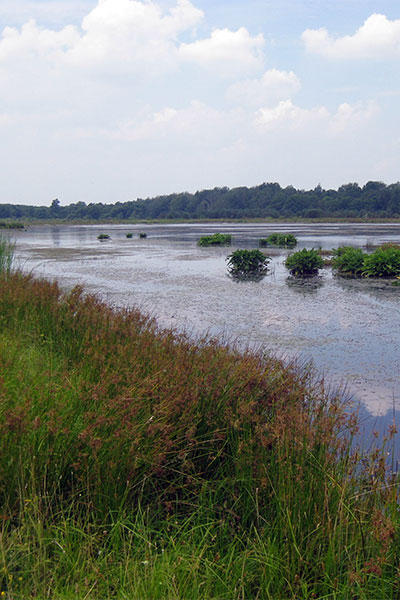 Wetland area with a rich diversity of native vegetation.