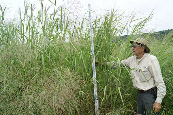 Calvin-Ernst-plants-switchgrass-for-seed-and-biomass-production