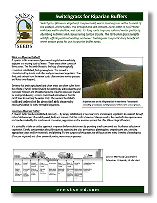 Switchgrass-for-Riparian-Buffers