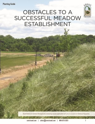 Obstacles to a Successful Meadow Establishment Planting Guide_web