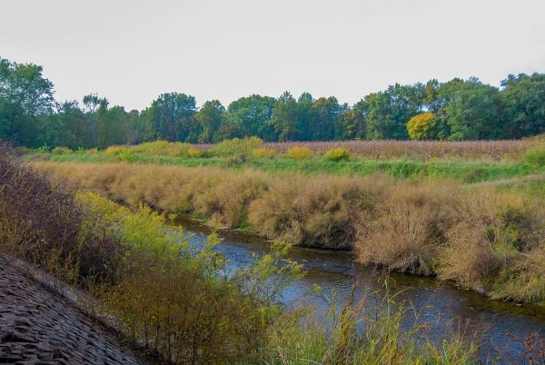 A mixed riparian zone. Note switchgrass on the stream bank on one side with additional buffer areas between the stream and agricultural fields. A recent installation of bioengineered woody deciduous shrubs is on the opposite bank.