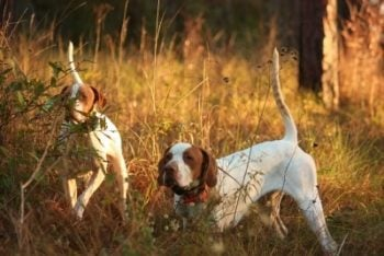 The 4 key quail and pheasant habitat types you need on your property