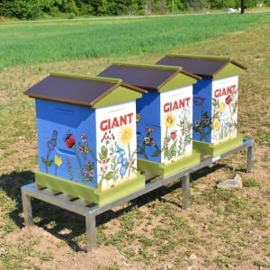GIANT Company bee hives