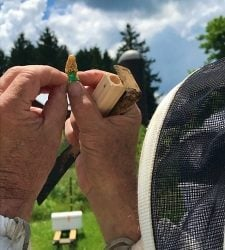 Ernst Conservation Seeds Hosts Northwestern Pennsylvania Beekeepers Association Queen Bee Improvement Project