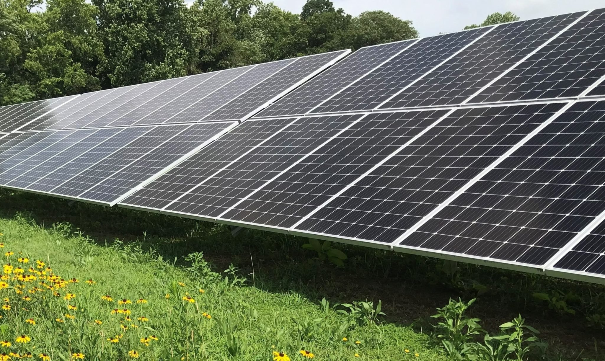 Keep It Simple, Solar: Developing Native Vegetation at Solar Energy Sites to Improve Drainage, Soil Health and Biodiversity
