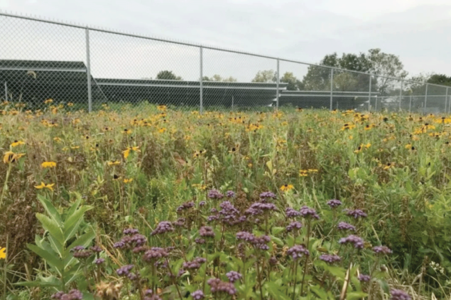 native seed mixes outside of a solar energy farm installation site