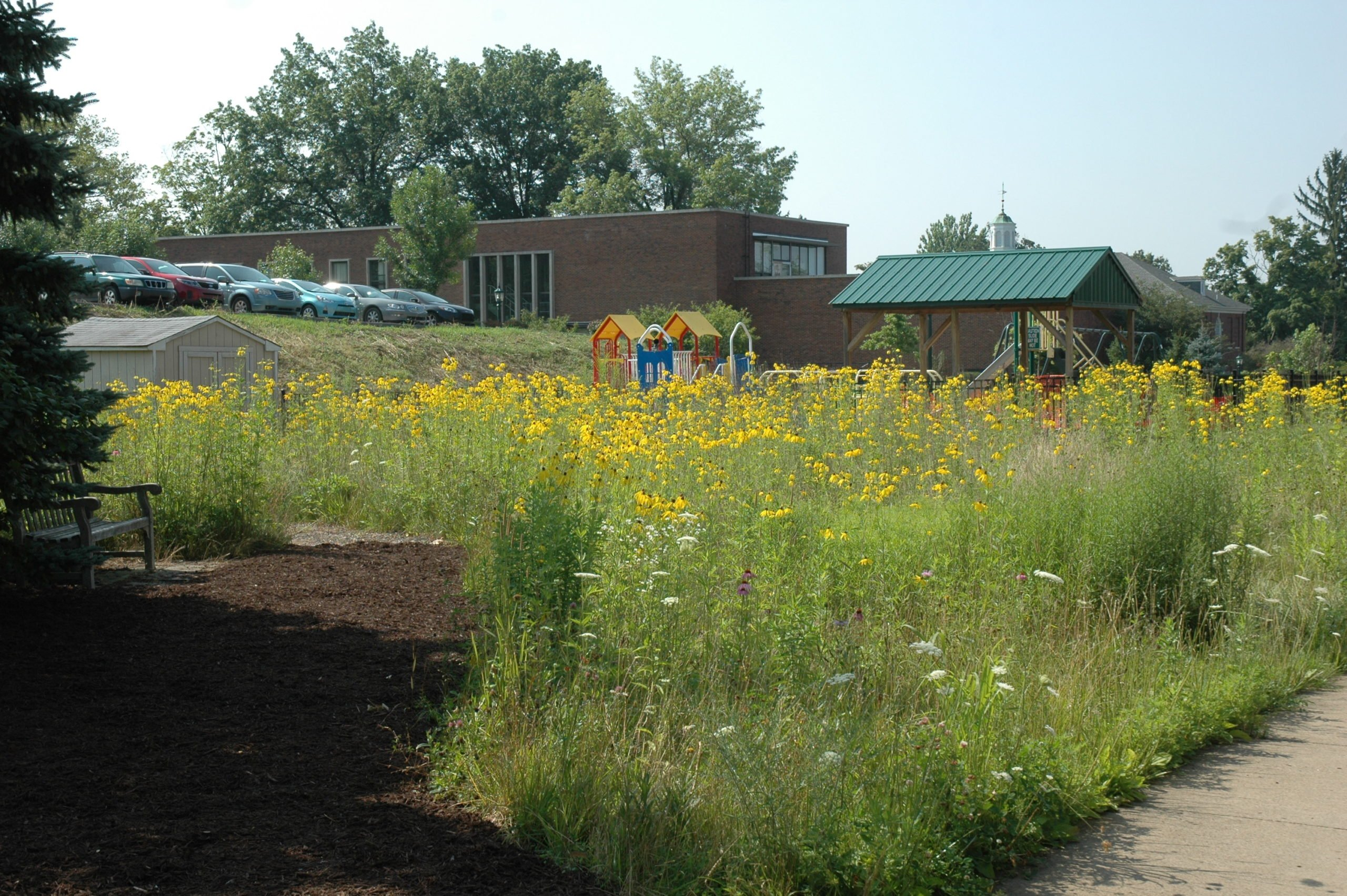 Residential, Commercial and Municipal: Why Native Vegetation Is A More Cost-Effective, Sustainable Option Than Turfgrass For Landscape Architects In Any Setting